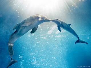 DESCRIÇÃO DA IMAGEM: a foto mostra dois golfinhos, Winter (que tem uma prótese na cauda) e Hope. Elas estão juntas, em harmonia,  debaixo d´água